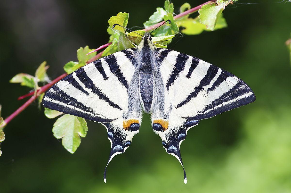 Makro fotografia - motýľ