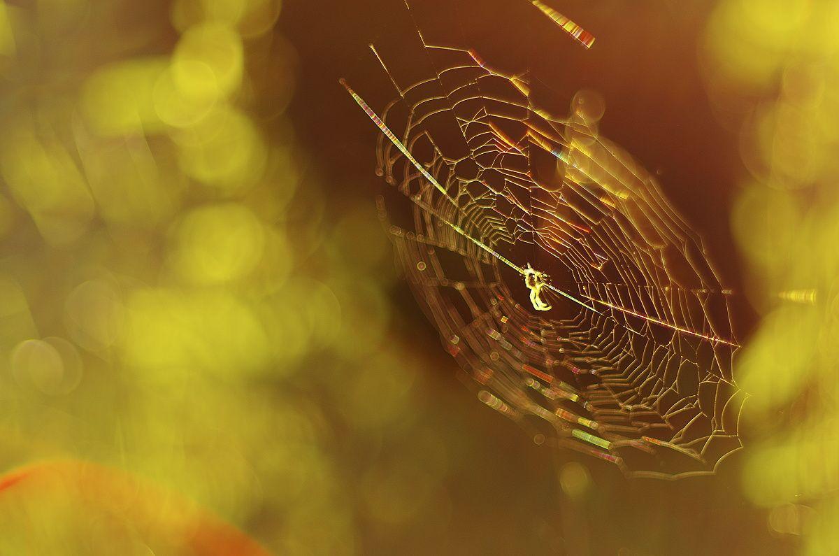 Fotografia prírody - pavúk v protisvetle