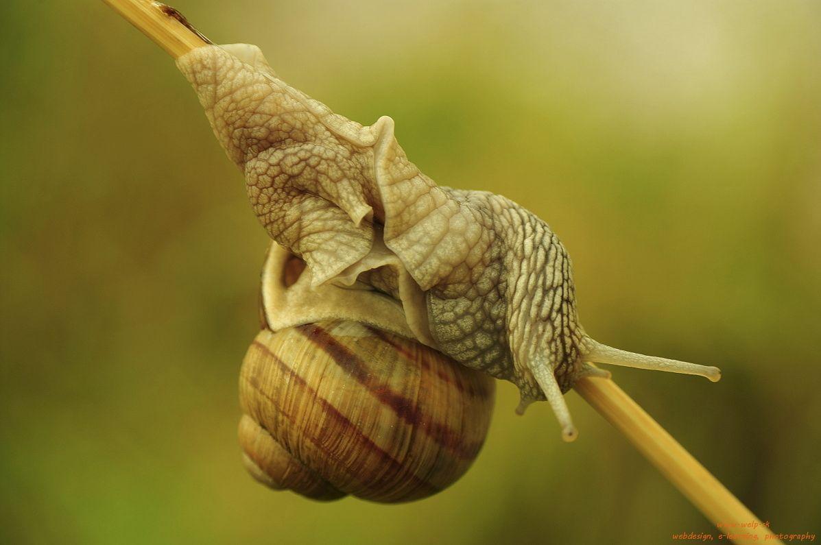 Makro fotografia prírody - slimák