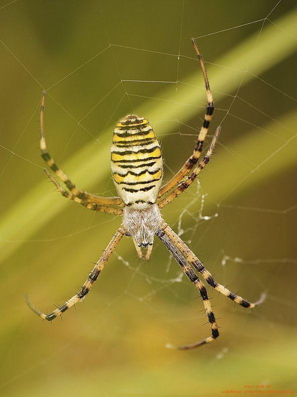 Makro fotografia prírody - pavúk
