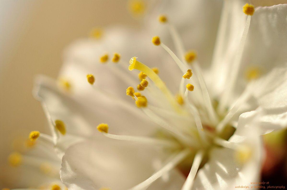 Makro fotografia prírody - kvet