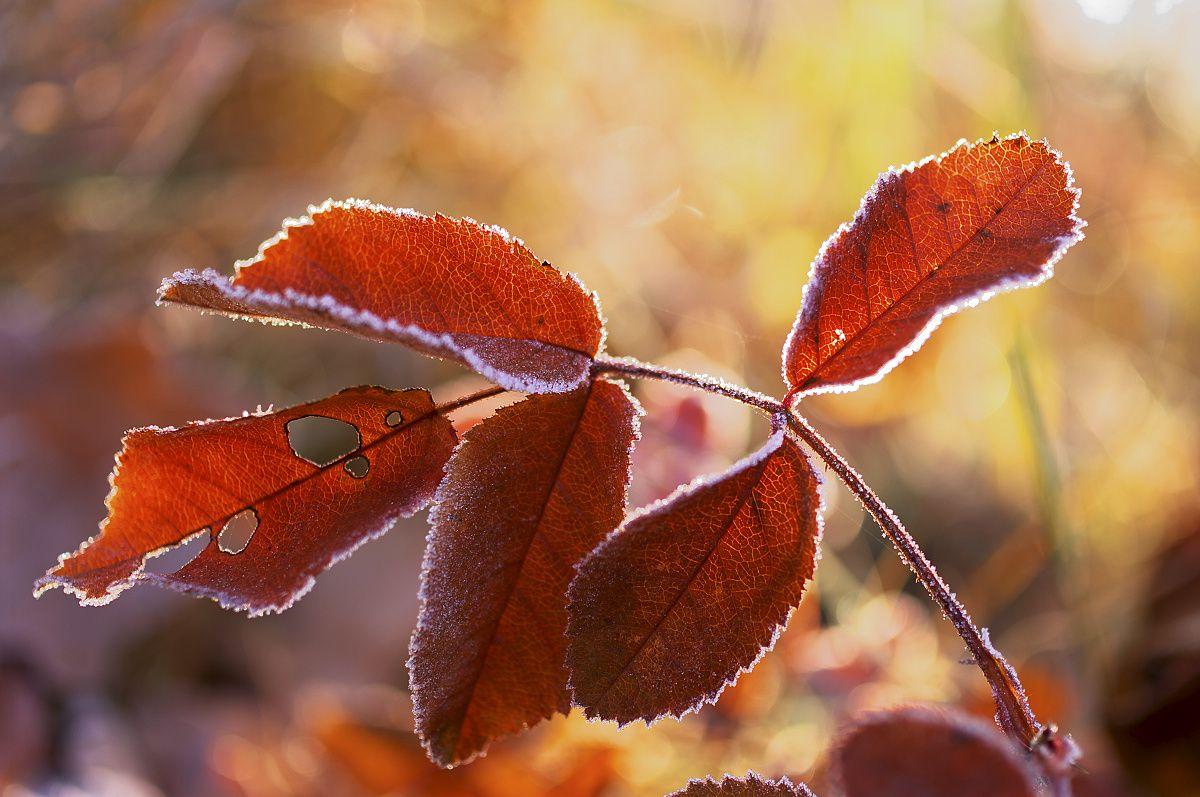 Detailná prírodná fotografia